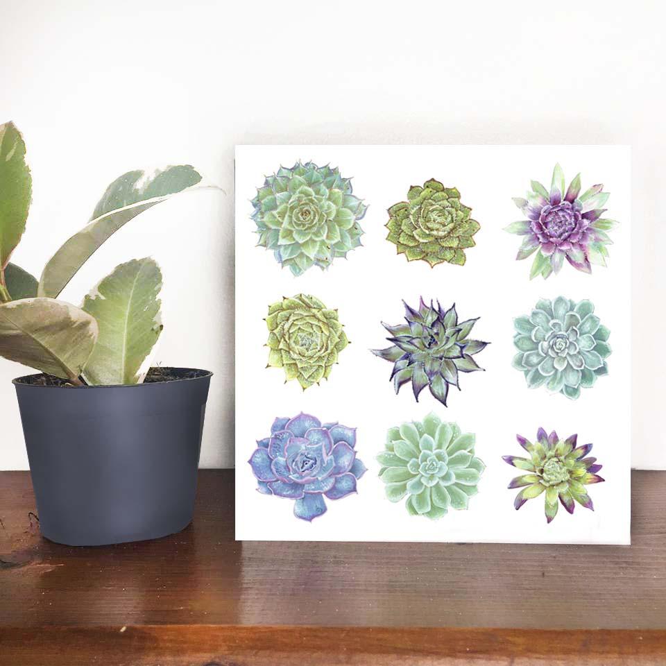 Succulent card photo